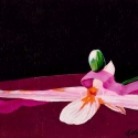 Orchid Ribbon